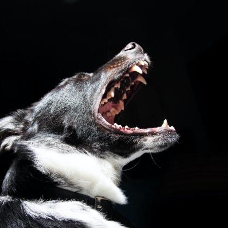 Yavru köpek ısırması nasıl önlenir ?