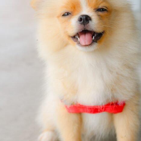 Sürekli havlayan köpek nasıl susturulur ?